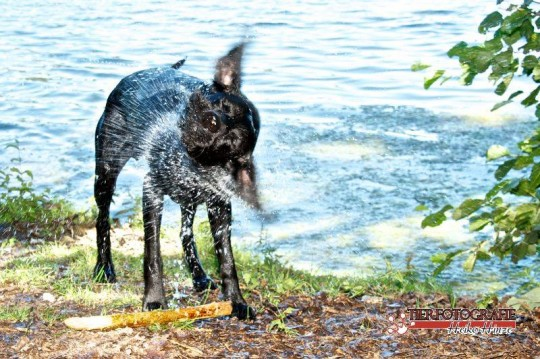 Hundeschwimmen im Waldbad