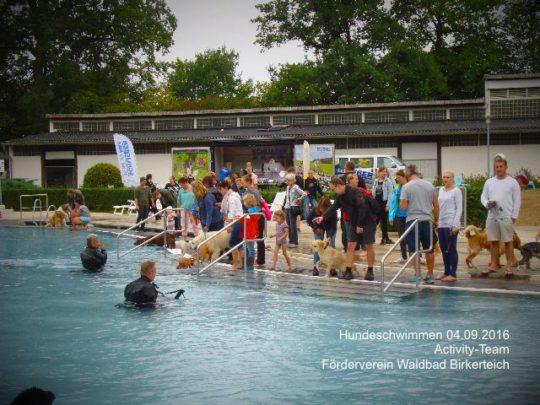 Hundeschwimmen im Waldbad Birkerteich